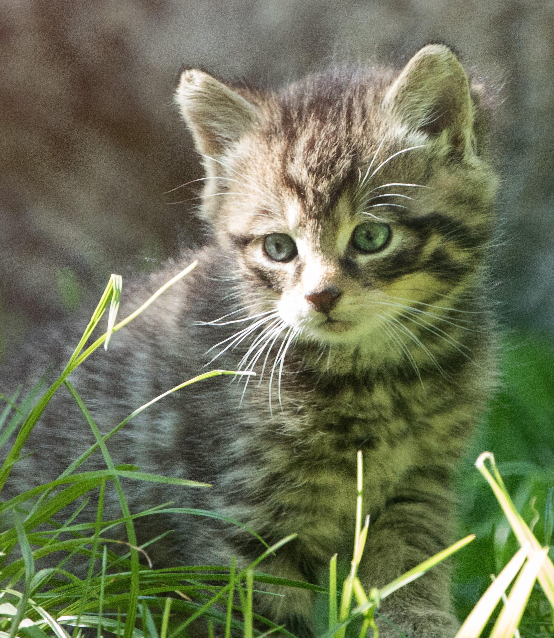 wildcatd4website